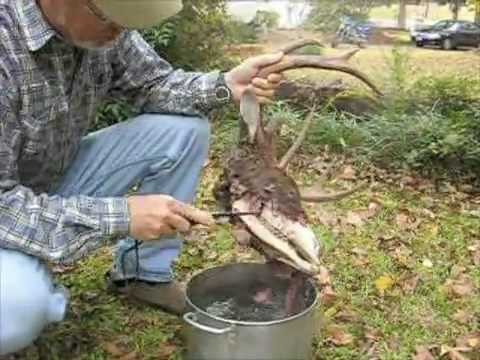 how to clean deer antlers without boiling