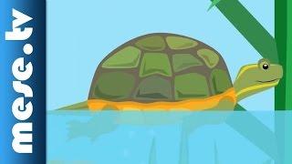 Gryllus Vilmos : A teknősbéka (gyerekdal, mese, Félnóta sorozat)