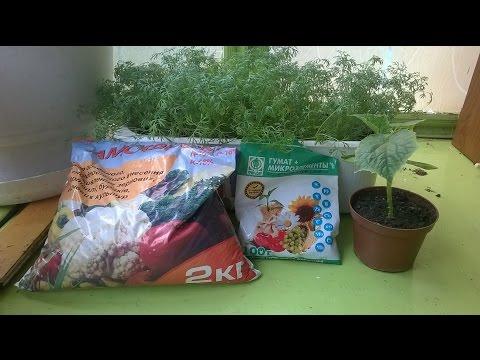Чем подкормить огурцы. Удобрение рассады на балконе .