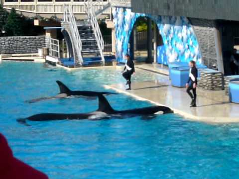 Sea World Shamu's Holiday Day Time Show (2)