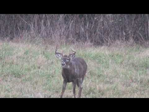 Iowa deer hunting, bow hunting, monster whitetail, big buck down wind