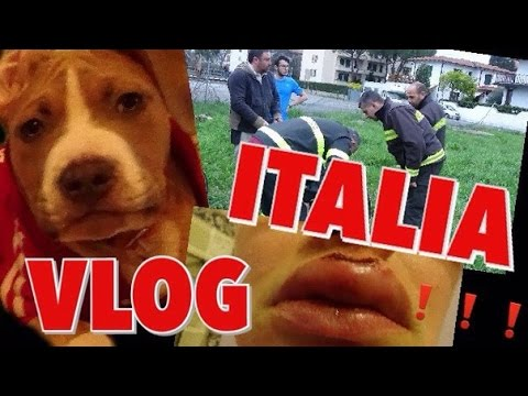 VLOG:СОБАКА на ГРАНИ СМЕРТИ  Я ПОРВАЛА ГУБУ ITALIA PISA