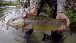 Fishing Paradise - Big Trouts in Trentino