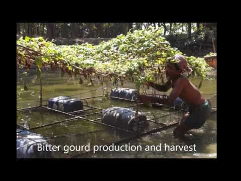 IFCAS (Integrated Floating Aquageoponics System) in Bangladesh and Nepal