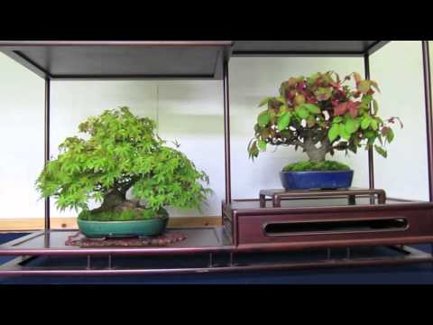 Japan Bonsai/Shohin Trip Osaka 2010