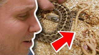 SNAKES BORN DEAD!! WHY??? | BRIAN BARCZYK