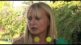 Cucciolandia p.1 (Golden Retriever) - Amici Animali TV - Canale 248