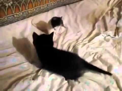 Cat and mouse, Смех и только, Новые Приколы, Шутки, Смешные ролики Юмор! Прикол! Смех