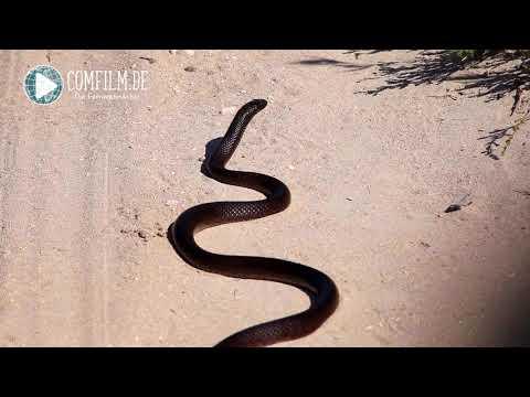 Episode #65, ist Australien gefährlich? Australien In 100 Tagen