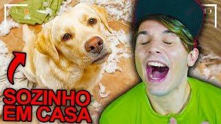 DESCUBRA O QUE ANIMAIS FAZEM SOZINHOS EM CASA !!! ☆ CÂMERA ESCONDIDA ☆