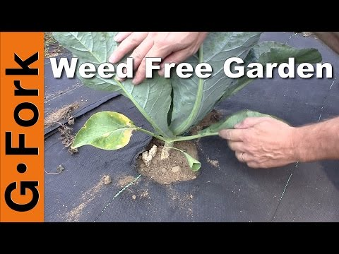 Natural Weed Control in the Vegetable Garden - GardenFork