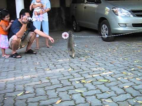 Monkey Mask / Topeng Monyet @Bandungan