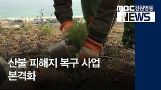 투R)대형 산불 피해지 복구 사업 본격화