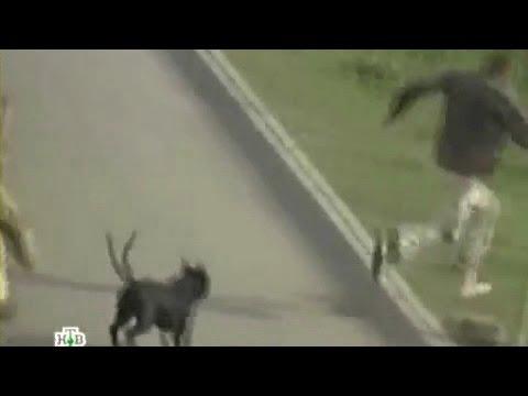 Собака нападает на людей