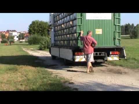Start gołębi młodych z miejscowości Konin(lot próbny) w dniu 03.08.2013 r.