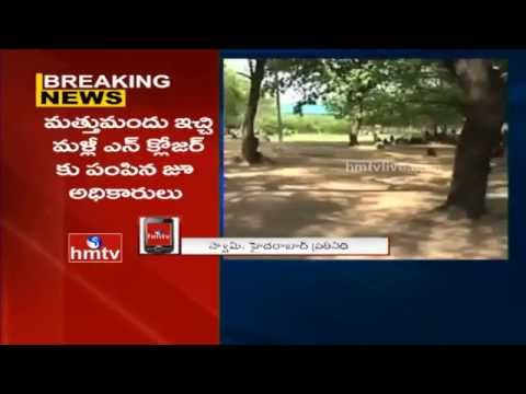 Tiger Escapes Enclosure at Nehru Zoological Park | Hyderabad | HMTV