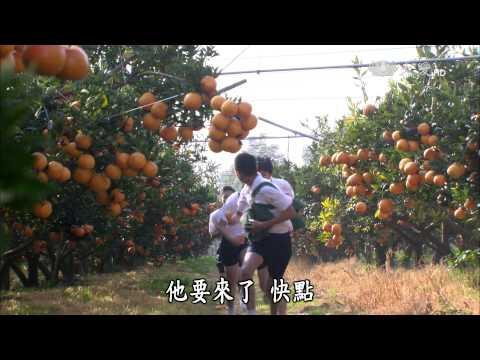 大愛-長情劇展-葡萄藤下的春天