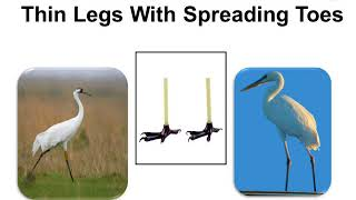 Science – Beak and Claws of Bird – in Hindi