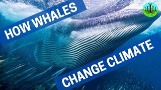 How Whales Change Climate