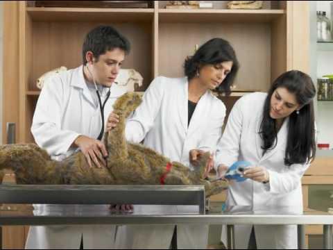 medicina veterinaria y zootecnia uvm youtube