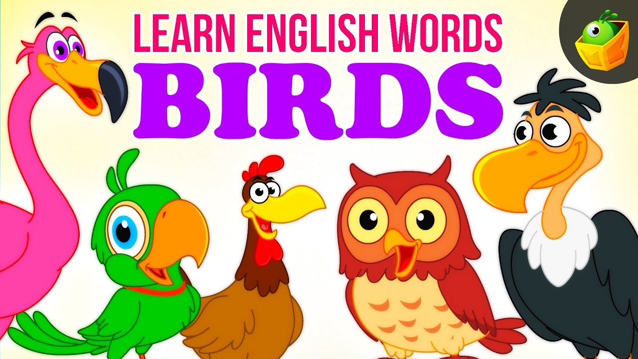 Animals and birds pictures for kids