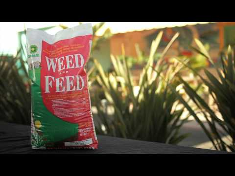 Green All Weed & Feed - Armstrong Garden Centers