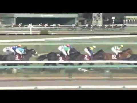 2014.12.28 Hopeful Stakes (JPN) - Shining Lei