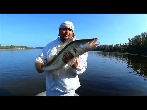 Супер Рыбалка | Огромные судаки | Ловля Судака на джиг | 1080p | BF-№ 50