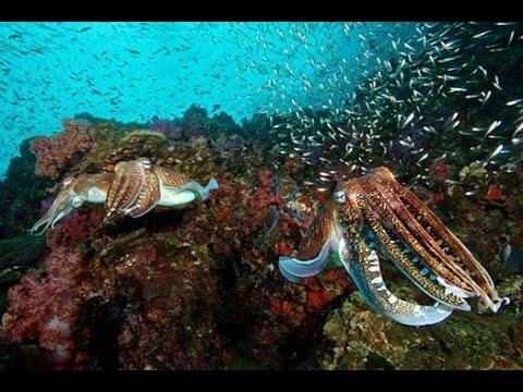 Scuba diving Sipadan Island  Malaysia underwater video: turtles, sharks, barracuda