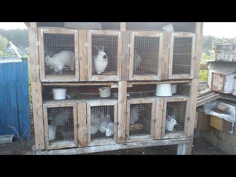 Уличные клетки для кроликов