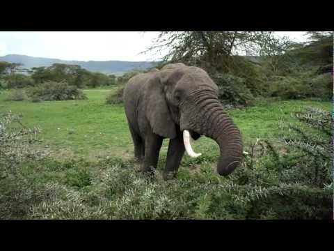 foraminiferans form a symbiotic relationship with elephants