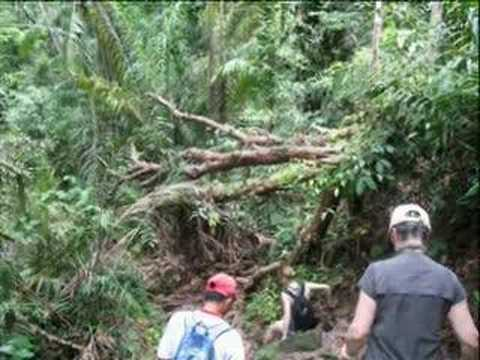 South East Asia Travel Borneo Jungle Hike Malaysia Tourist