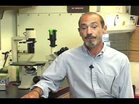 Scripps Research Professor Steven Reed Speaks about Cancer Discovery