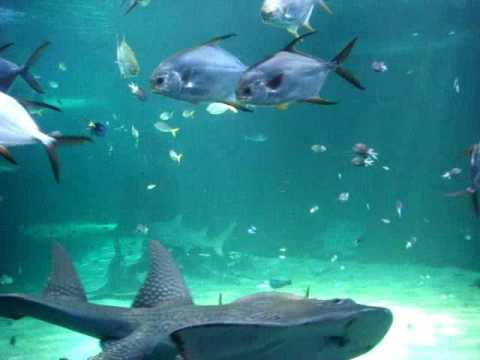 Sydney Aquarium: Sharks, Turtles, Rays, and many more types of fish