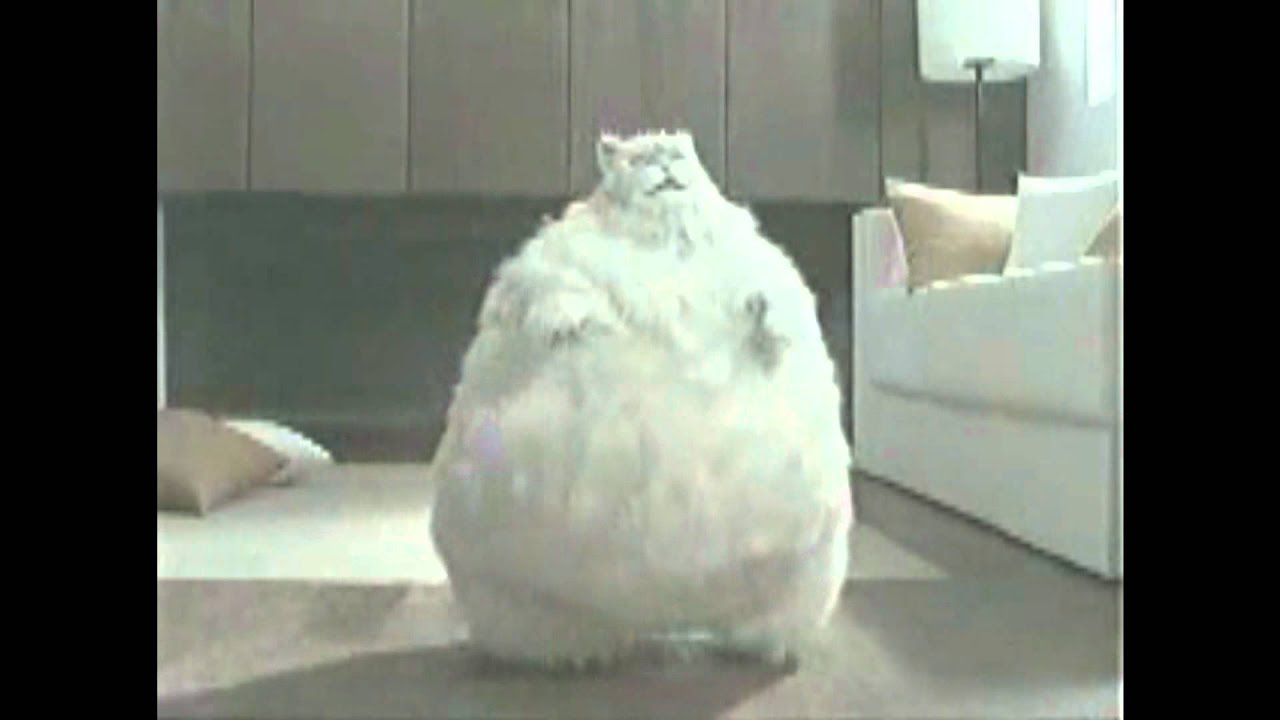 The Fattest Cat Ever Video