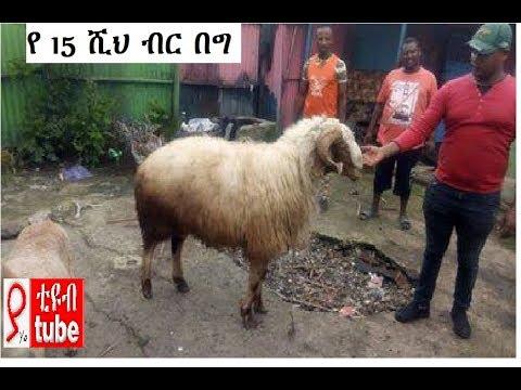 በዘንድሮው የበዓል ገበያ 15 ሺህ ብር ያወጣ በግ Tadias Addis Ababa Ethiopia