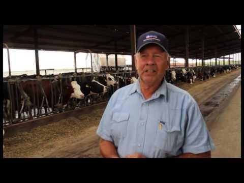 ProCROSS herd of W & J Dairy, Oakdale, California, USA