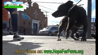 Homeless dog eating from a pile of trash finally gets rescued by Hope For Paws.
