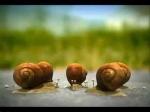 Minuscule-libellules - Rujak Toon - Balapan video