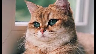 Funny Cute Cat and Kitten Videos - Kittens, Cats Playing and Meowing #92