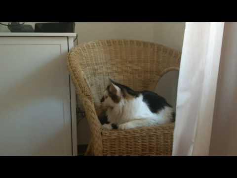 Кот протестует против домашней уборки!