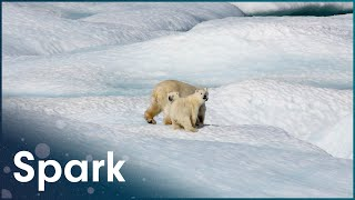 Understanding The Science Of Climate Change | Earth's Survival | Spark