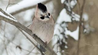 Winter Song - Ronan Keating