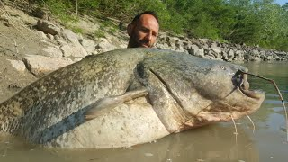 MONSTER CATFISH IN SPINNING LOST IN A TREE - HD by CATFISHING WORLD