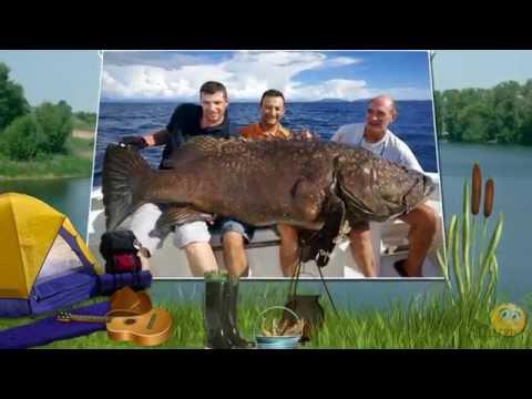 продюсер рыбак
