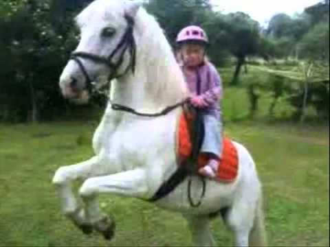 3 Years Old Girl Riding Pony Youtube