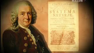 Судиславские леса