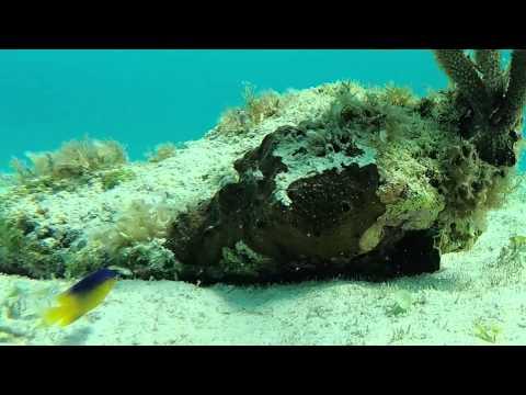 Seven Mile Beach, Georgetown, Grand Cayman Island - Snorkel GoPro Hero4