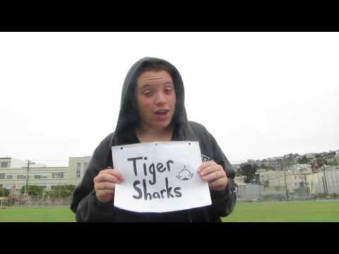 Tiger Sharks 2