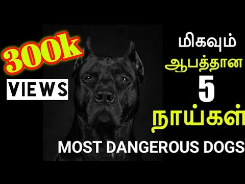 Dangerous dog in the world
